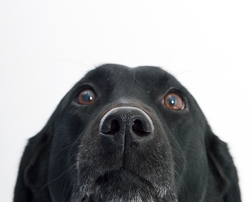 DOG LAB